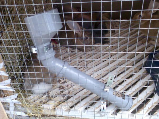 Как сделать кормушку своими руками для кроликов