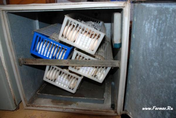 Инкубатор схема петушок