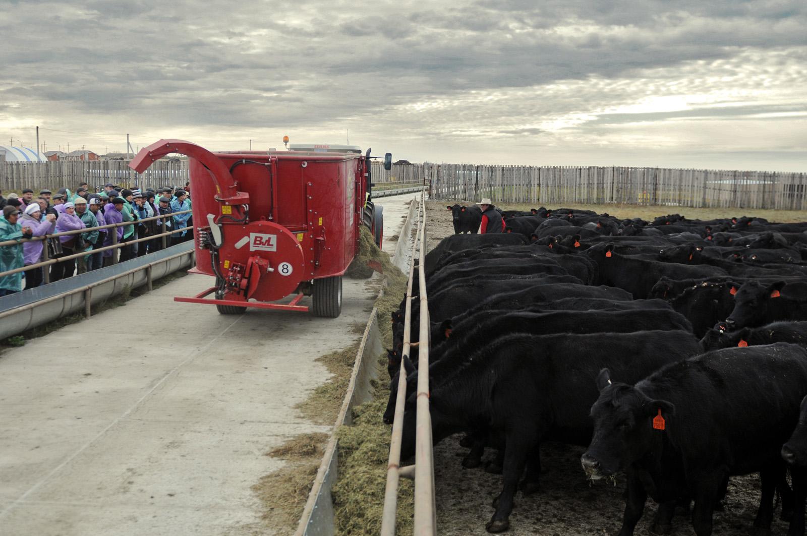 Выращивание бычков рентабельность 78