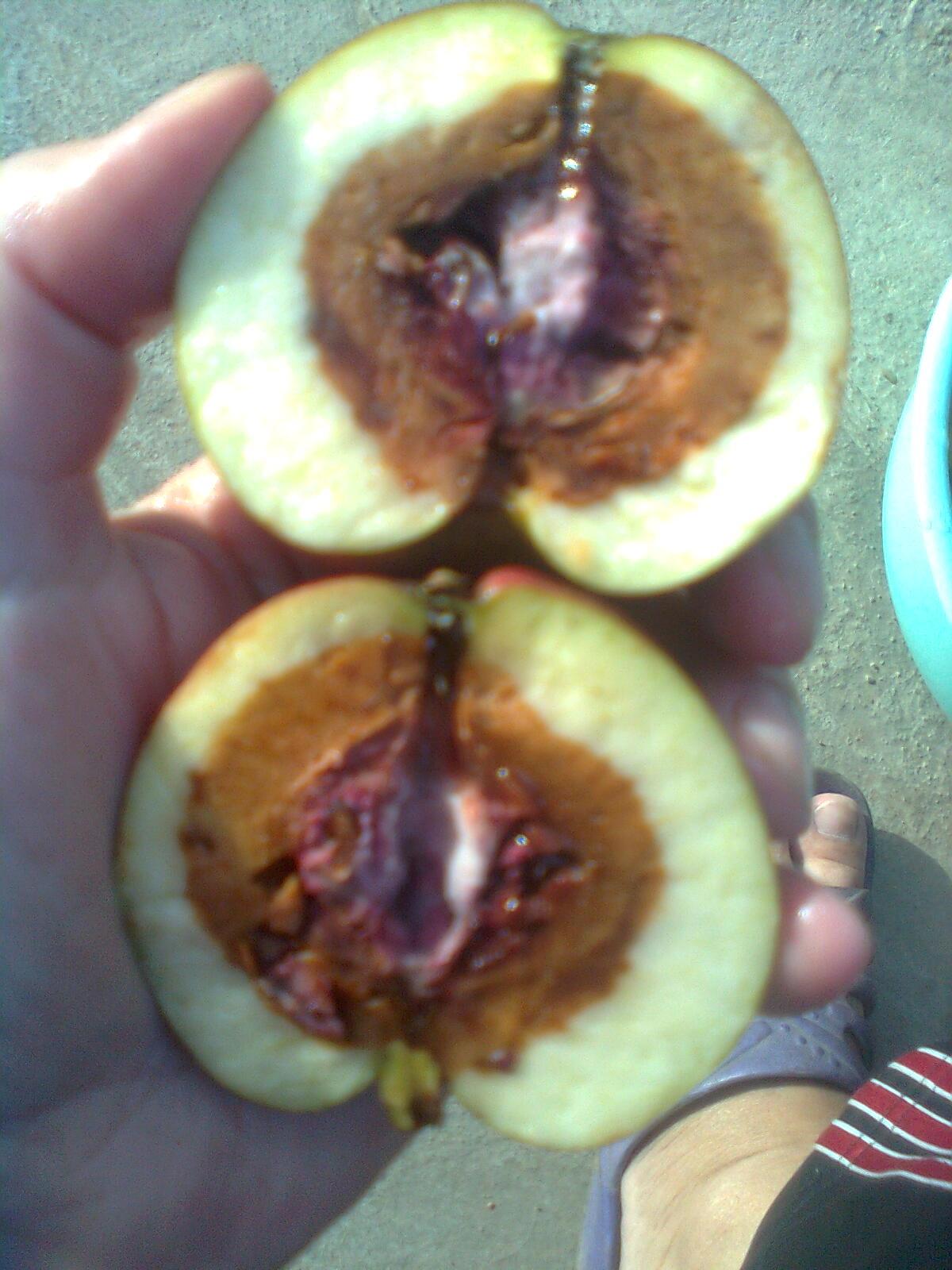 мультфильме картинка гнилое яблоко внутри работа