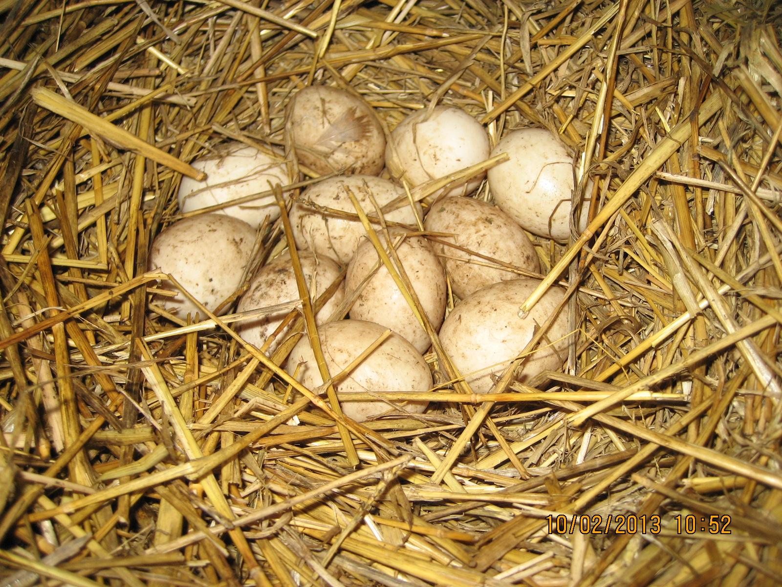 Сайт с топтание яйцъ 2 фотография