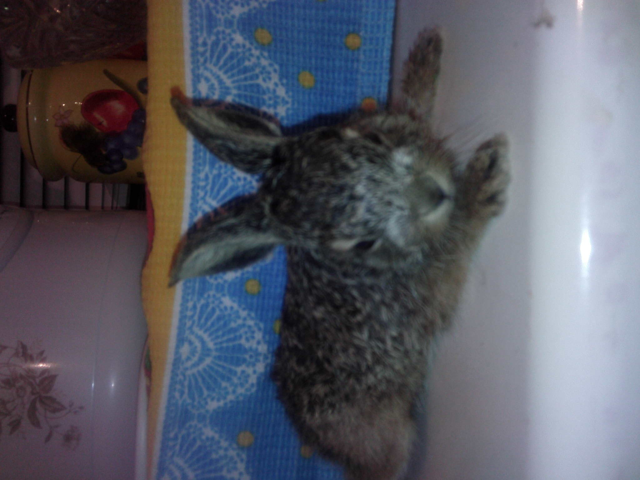 Зайчонок в домашних условиях 158