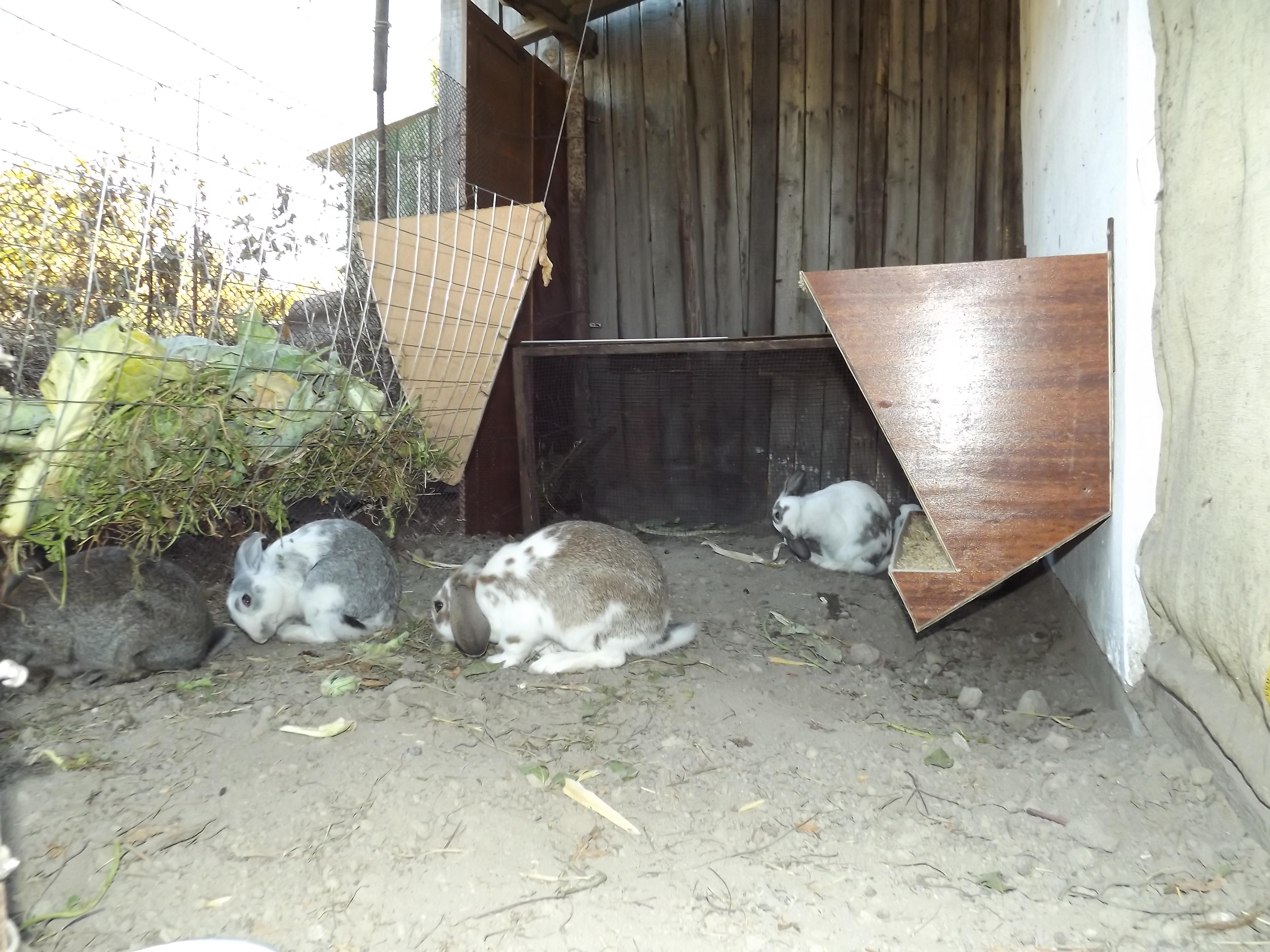 Кролики в вольерах. - Страница 3 Dscf2117