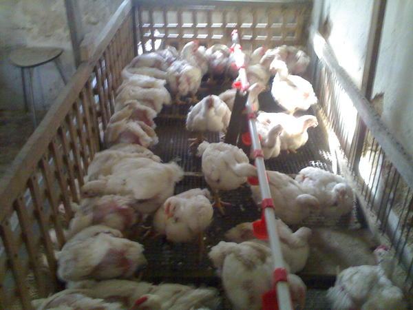 Кормушки для куриц своими руками фото