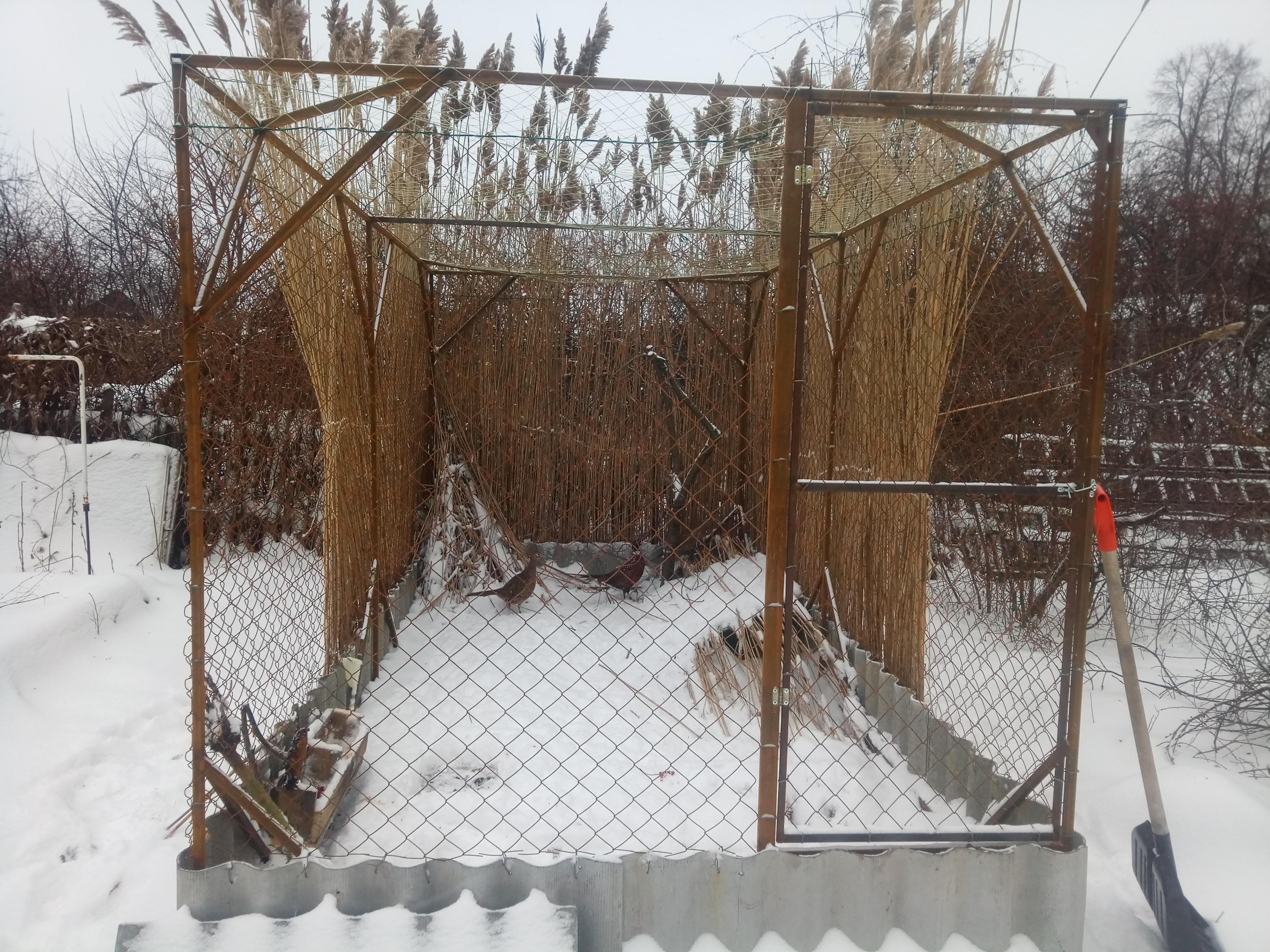 вышла туалет, клетка для фазанов своими руками фото пространство