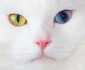 Аватар пользователя Ириша счасливая