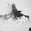 Аватар пользователя Samhein Raven
