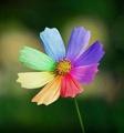 Аватар пользователя Flower