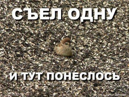 1350033034_1350028628_019.jpg