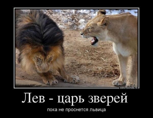 81573714_lev-tsar-zverej-.jpg