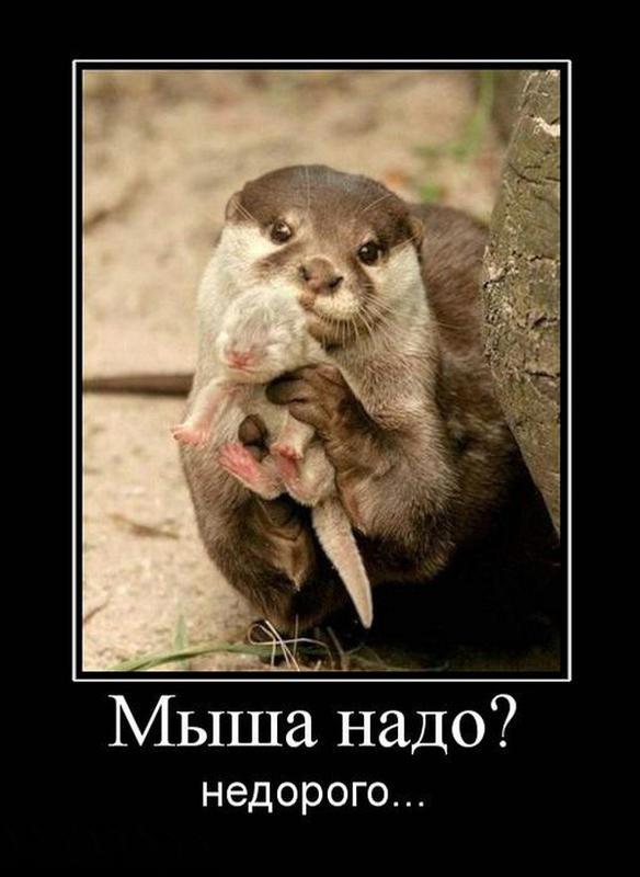 demotivatory_na_pjatnicu_11.jpg