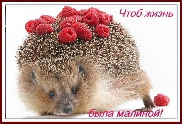 ezhik_s_malinoy_s_dr.jpg