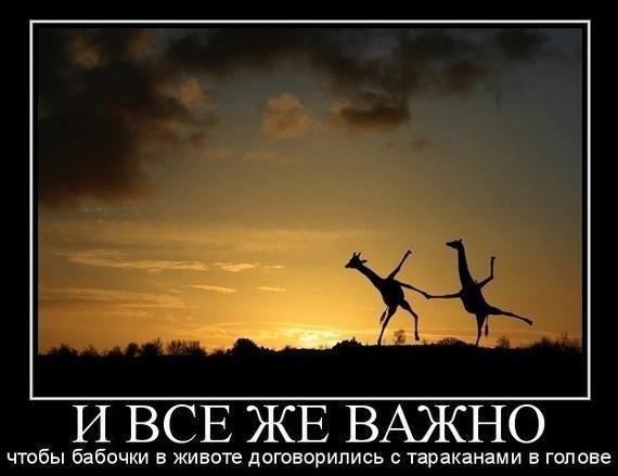fb3a8539dc_8456373_5722082.jpg
