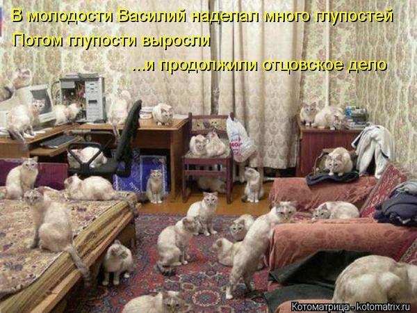 kotomatritsa_5q3.jpg