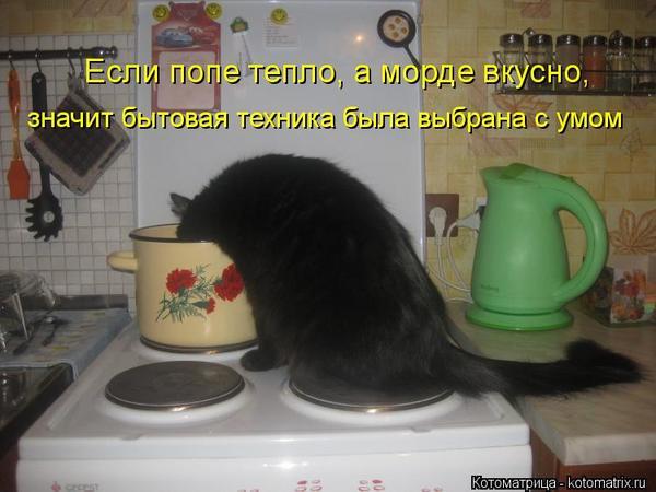 kotomatritsa_qv1.jpg