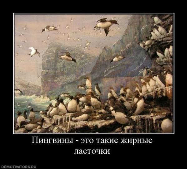 pingviny-lastochki.jpeg