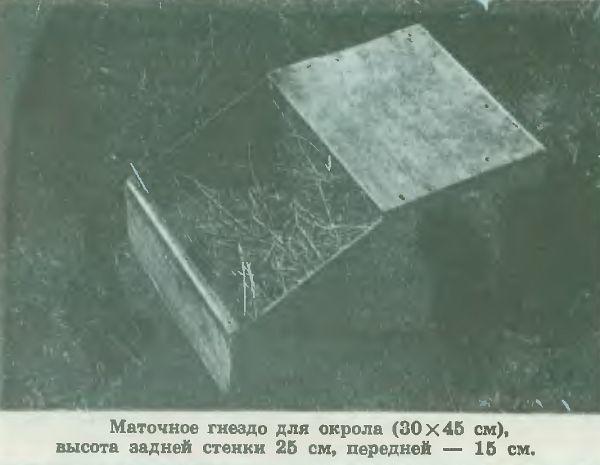 kuzmin4.jpg