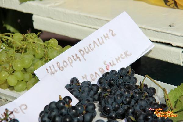 i_ne_tolko_yuzhnouralskiy_vinograd.jpg