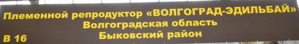 volgograd-edilbay1.jpg