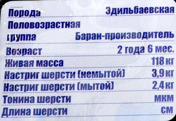 volgograd-edilbay3.jpg