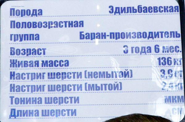 volgograd-edilbay4.jpg