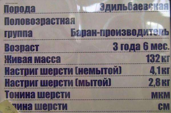volgograd-edilbay6.jpg