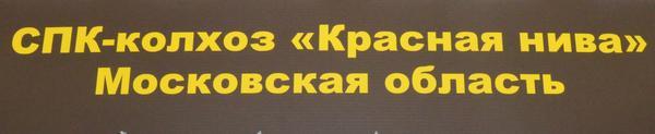 krasnaya_niva1.jpg