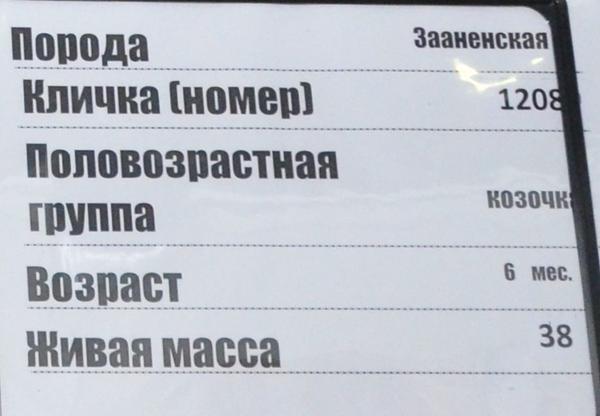 krasnaya_niva2.jpg