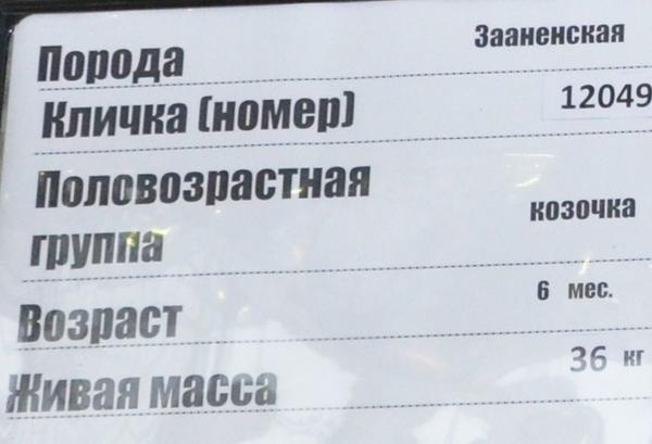 krasnaya_niva3.jpg