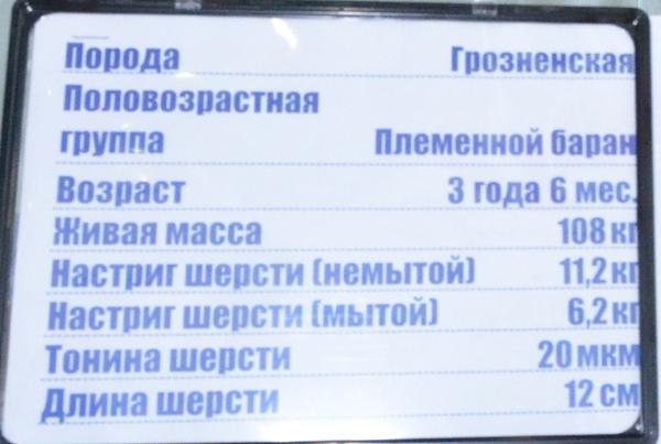 chernozemski2.jpg