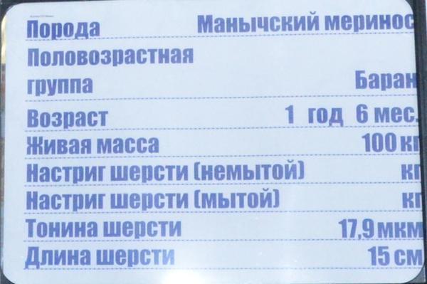 manych3.jpg