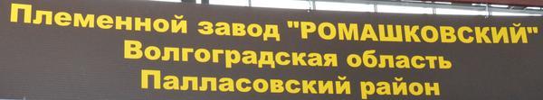 romashkovskiy1.jpg