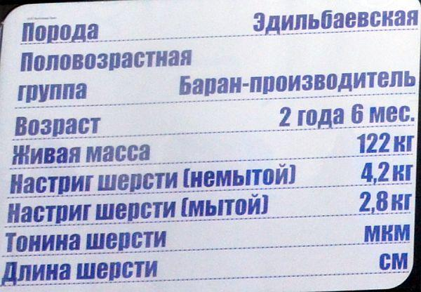 volgograd-edilbay2.jpg