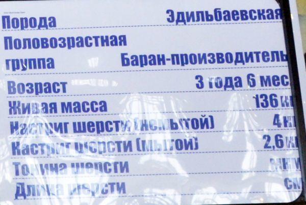 volgograd-edilbay5.jpg