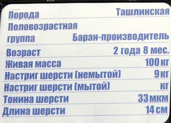voroshilova3.jpg