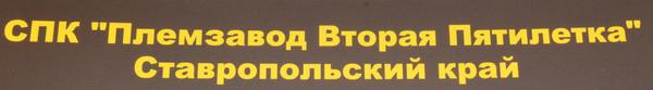 vtoraya_pyatiletka.jpg