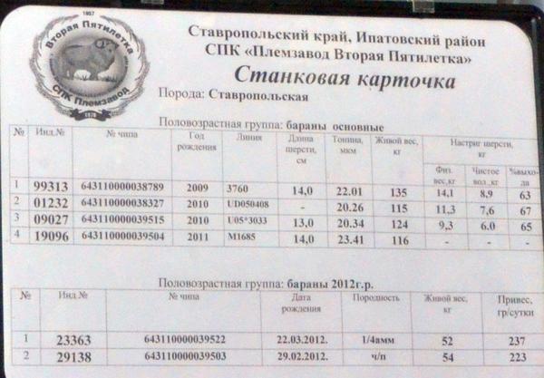 vtoraya_pyatiletka2.jpg
