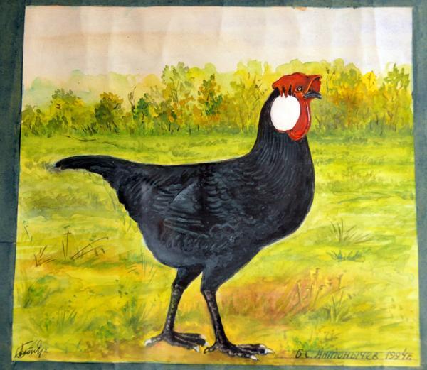ptica1.jpg