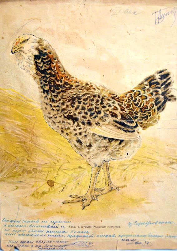 ptica7.jpg