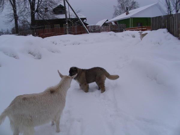 zima_023.jpg