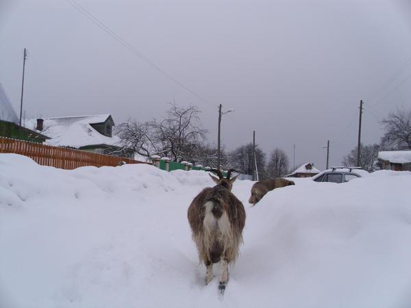 zima_029.jpg