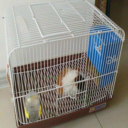 professional_guinea_pigs_indoor_kennel_box_cage.jpg