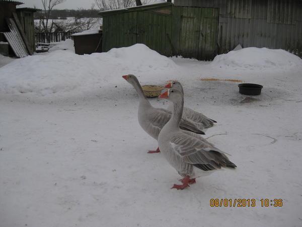 zima_2012-2013_036.jpg