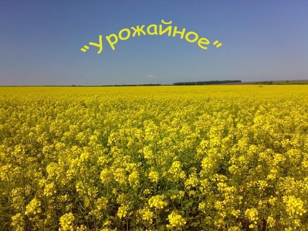 19062010998_kopiya.jpg