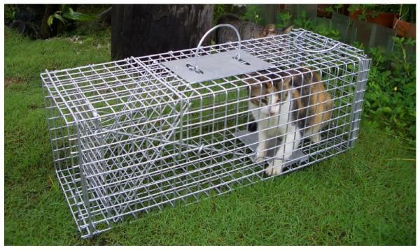 cat_trap.jpg