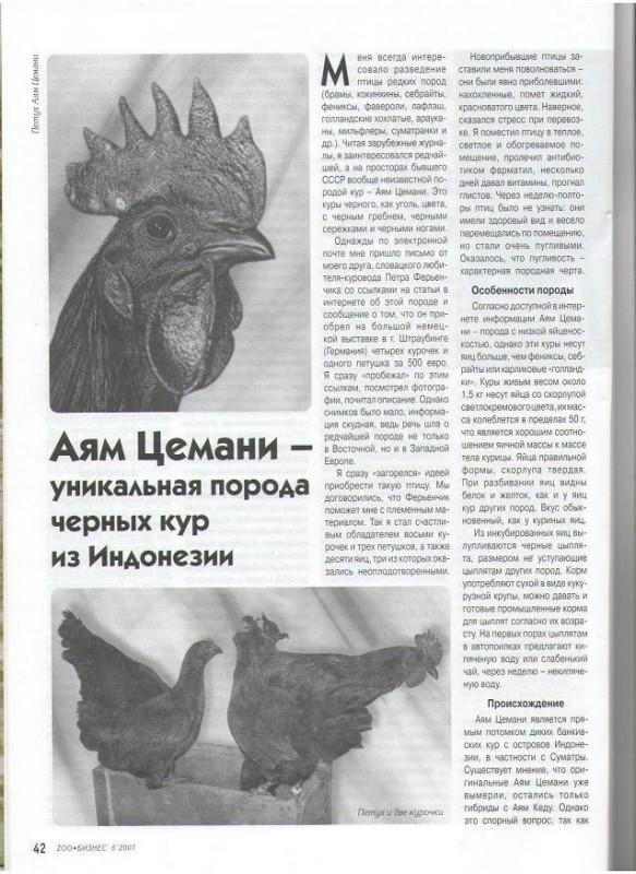 Cemani-rusA.JPG