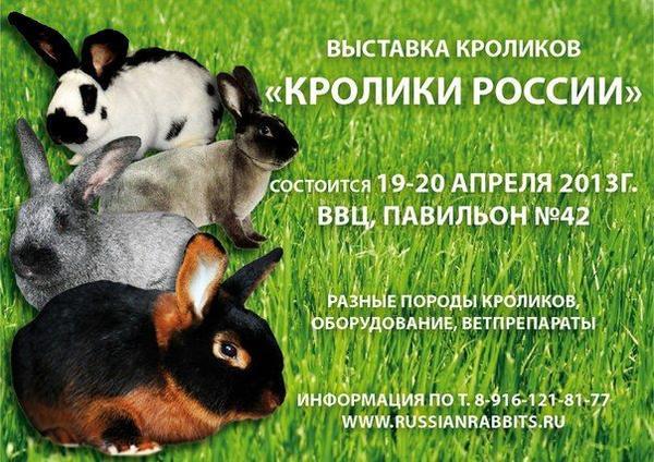kroliki_rossii.jpg