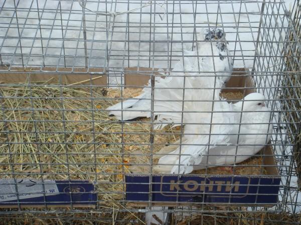 голубей 14.03.2010г. 003.jpg