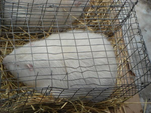 голубей 14.03.2010г. 006.jpg