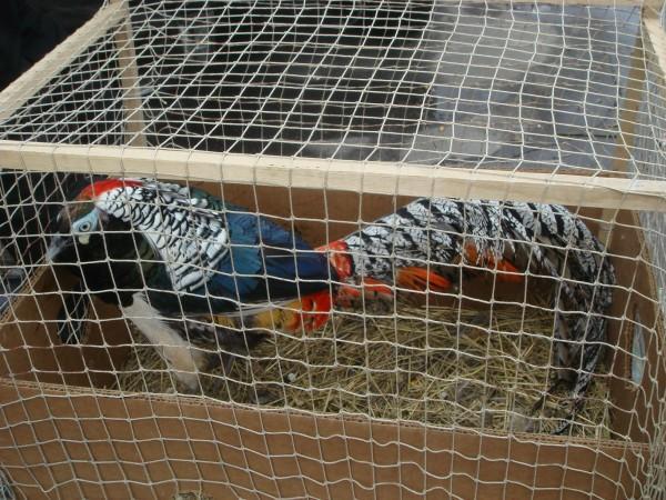 голубей 14.03.2010г. 011.jpg